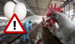 egg-eu-recall-pesticide-fipronil-contamination-836905