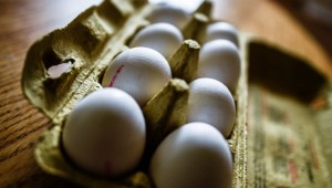 Netherlands eggs Fipronil scandal hits German Supermakets