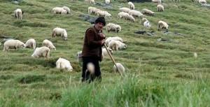 βιολογική-κτηνοτροφία-1021x521