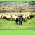 Ο χρόνος μετρά αντίστροφα για τους κτηνοτρόφους και το ΥΠΑΑΤ καθυστερεί να ενεργοποιήσει το πρόγραμμα de minimis