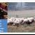 Συζητείται πριμ αποχώρησης των κτηνοτροφών από την αιγοπροβατοτροφία;